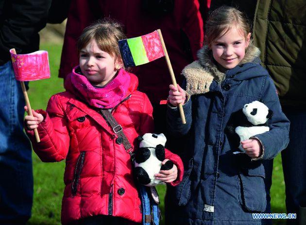 比利时熊猫1