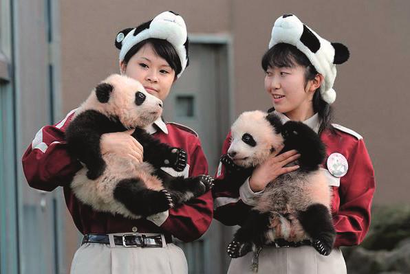 baby-panda-3_1211310i_副本