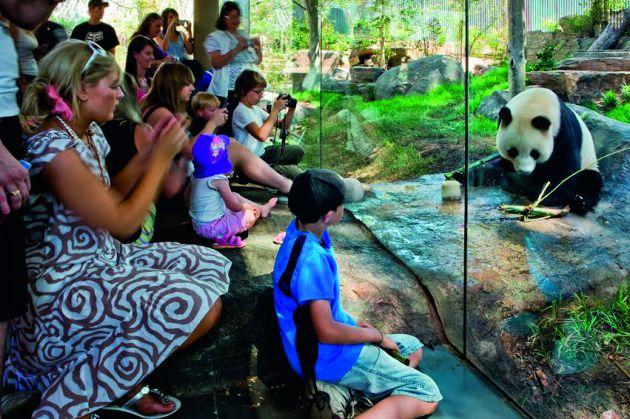 1280246702-zoo-panda--hassell--ben-wrigley--010