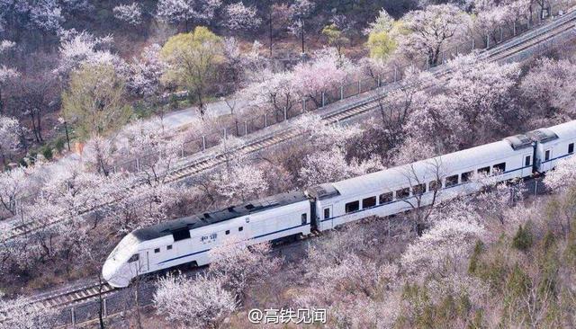 高铁与动车有什么区别?