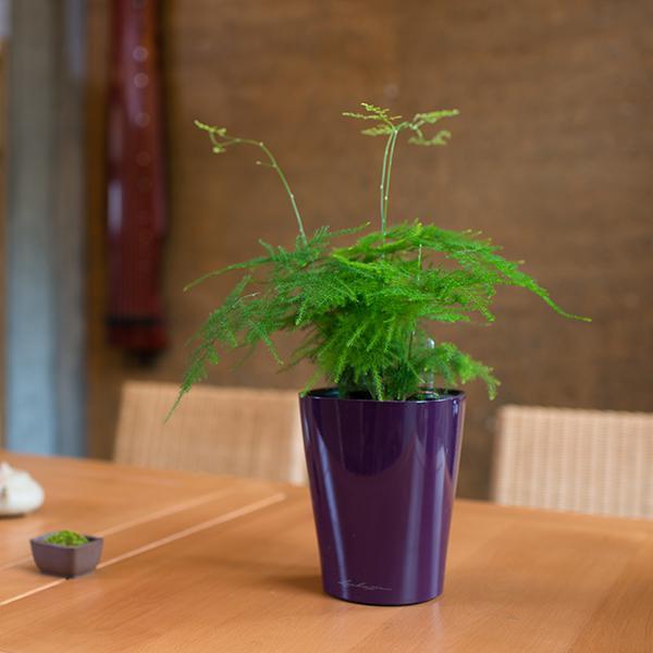 20种常见室内花卉,你都认识吗?