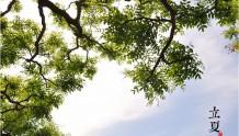 立夏(二十四节气中的第7个节气)