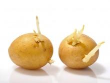 超简单!让土豆不发芽的方法