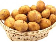 土豆进军主粮界 专家称只有马铃薯可以拯救人类