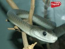 世界上10大最毒的动物排行榜
