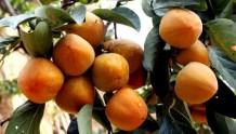 惊!吃了这多年的水果,才知道吃水果有这么多禁忌