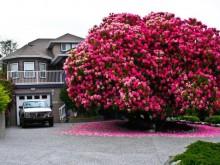 世界上最美的树,令人震撼!