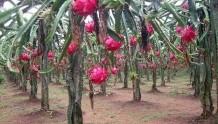 天天吃水果,你知道各种水果的功效吗?