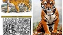 永远无法再见,盘点近代中国灭绝的15种珍稀物种