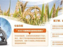 中国科学家水稻基因研究成果发布 设计水稻不是梦