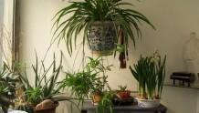 最适合书房养的几种植物